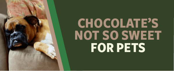 Chocolate's Not So Sweet for Pets