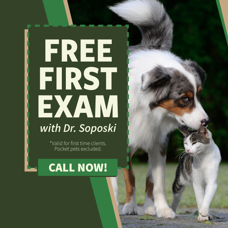 Free first exam with Dr. Soposki