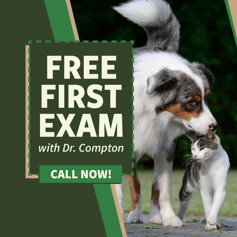 Free First Exam