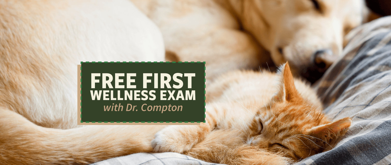 Free First Wellness Exam