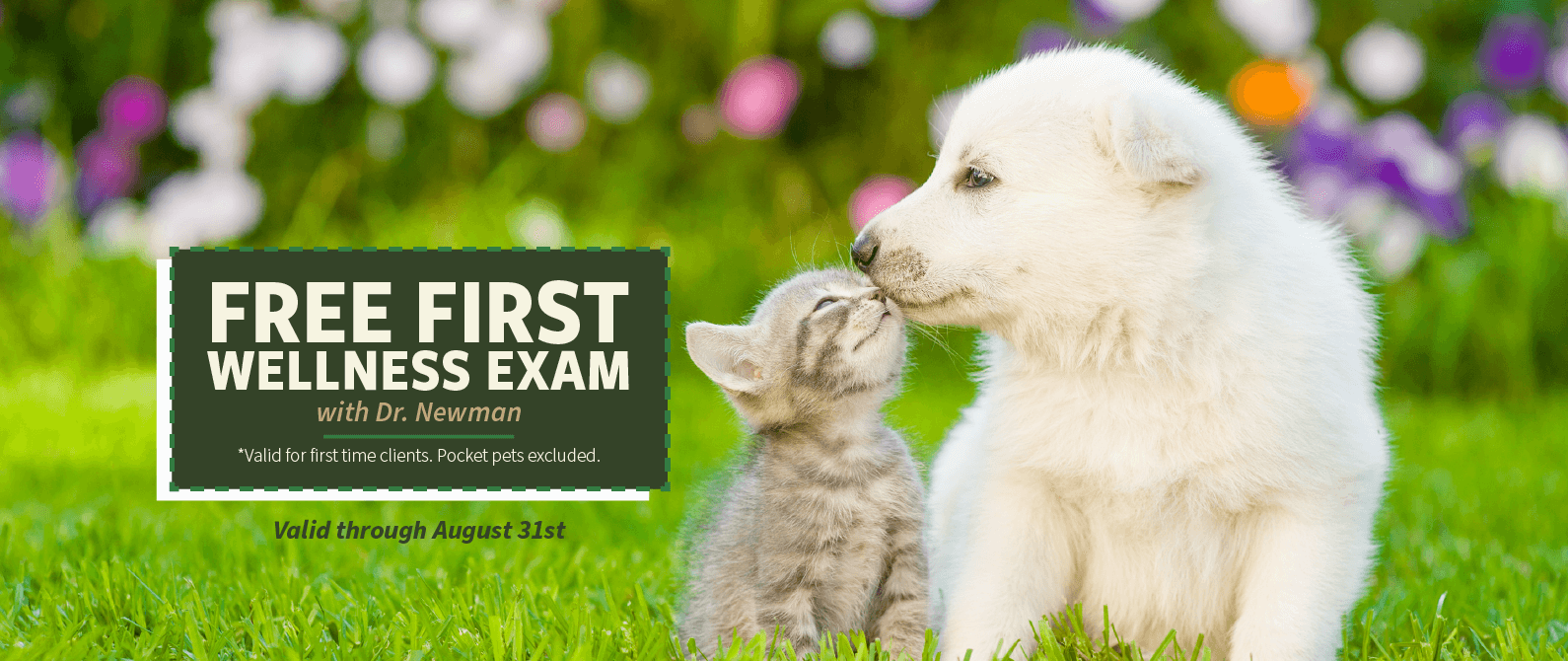 Free First Wellness Exam with Dr. Newman (Valid for first time clients. Pocket pets excluded)